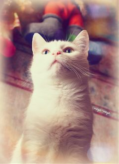 photography cute emotions spring pets & animals