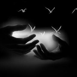 art black & white emotions