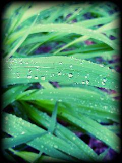 rain drop grass nature green