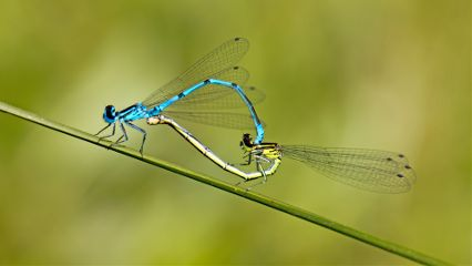 pets & animals summer photography forest pond dragonfly