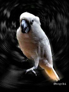 black & white bird photography pets & animals interesting