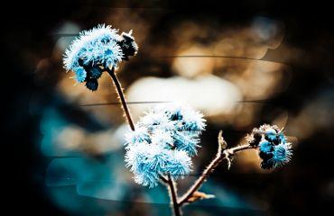 flower photography vintage spring