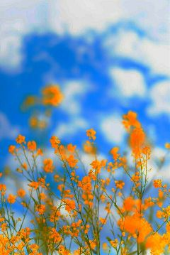 summer spring photography flower colorful