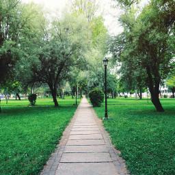 nature tree path summer green