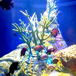 colorful cute photography nature petsandanimals