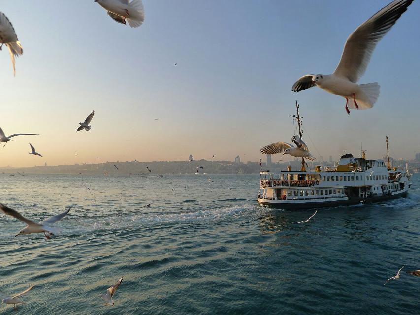 #photography #travel #bosphorus #sunset #istanbul #landscape  Bosphorus sunset