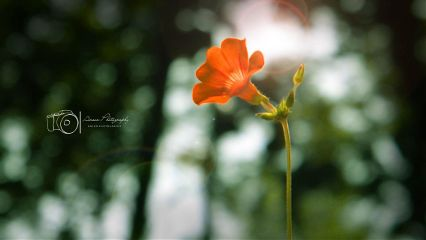 photography nature flower bokeh