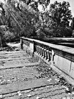 way hohenheim blackandwhite photography nature