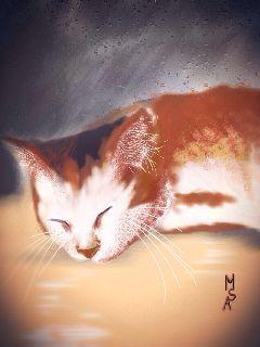 love him artwork cat lots of edit dccat