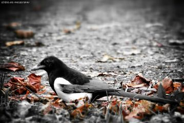 black color nature photography