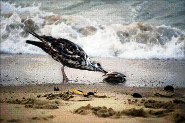 seaside bird