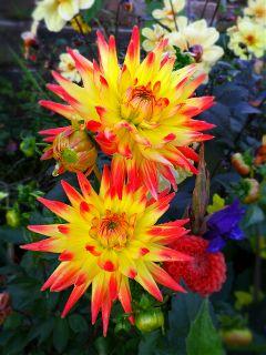 autumn flower nature travel byebyesummer