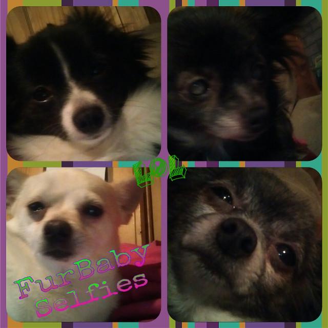My KIDS!!!!! #furbabies #theyarepeopletoo #lovethemall #thesearemyKIDS #furbabyselfie