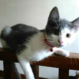 kitty kittycat kittylove kitten haljordan