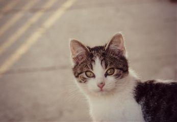 cat petsandanimals love cute