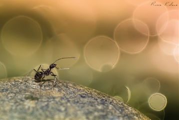 macroart bokeh macro animals indonesia