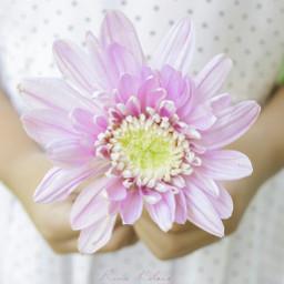 purple flower photography nikon funnzyfam