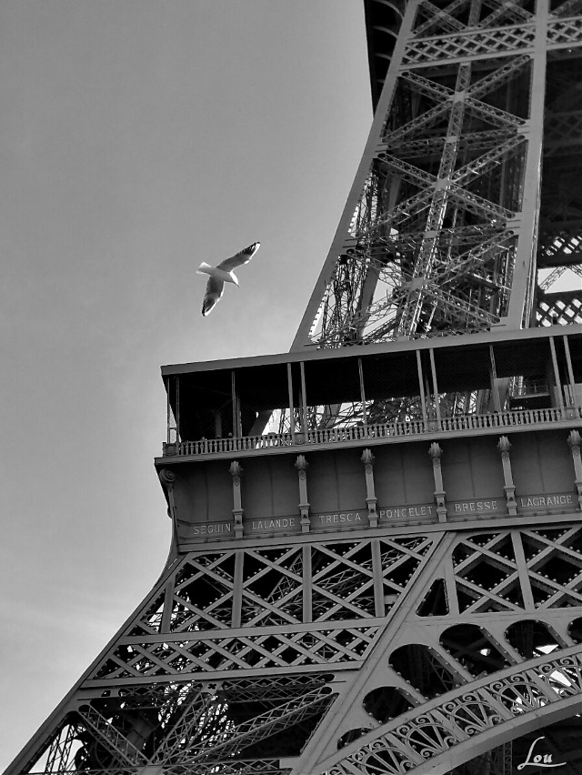 #seagull #bird #blackandwhite #paris #parisbyLou #eiffeltower