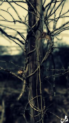 nature earthphoto photography blur