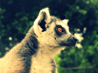 valencia lemur spain travel photograph