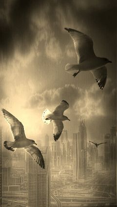 sepia photography freetoedit birds scenery