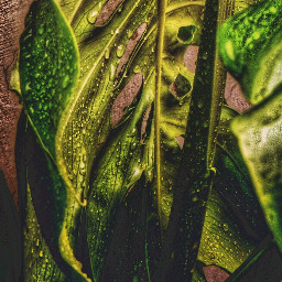 leaflove plant photography nature rain