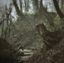 forest natur walk